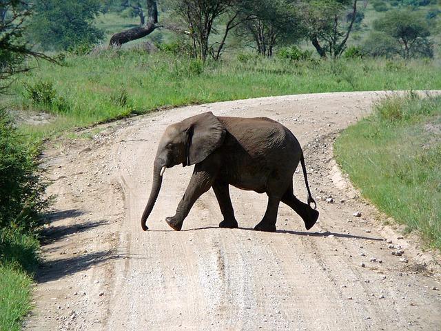 不言実行なタイプの多い「ゾウ」と診断されたあなたは妥協を許さない努力家ではありませんか?