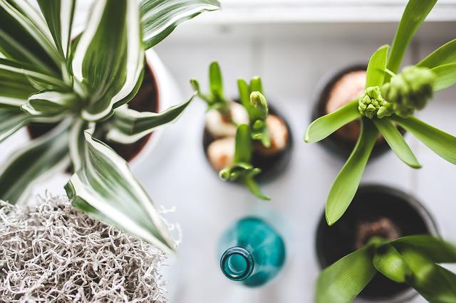 悪い運気を断ち切るには観葉植物が1番?!観葉植物と風水の意外な関係性について!