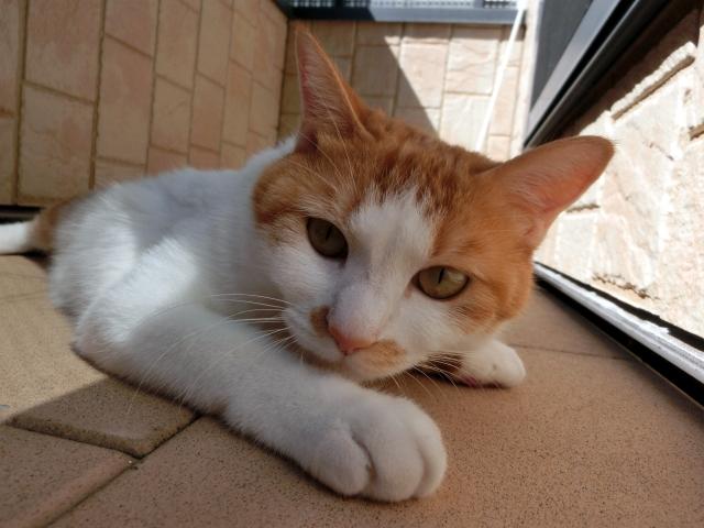 猫好き必見!猫占いで性格診断ができる。あなたはどんな猫タイプなのかを当ててみよう