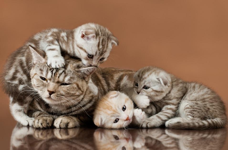 猫が沢山でてくる夢・猫を飼う夢・たくさん出てくる夢における夢占いの暗示とは?
