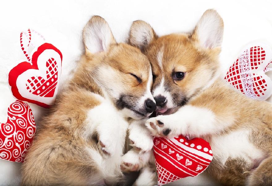 犬が出てくる夢について。犬を飼う・たくさんいる情景・噛まれる・なつくなど状況にあわせてチェック
